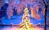 Rozdíly mezi britskými a americkými Vánoci